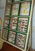 Butterfly Collection - one of many cases